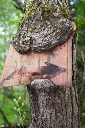 hither: ingrown in the tree trunk sign in the form of arrow Stock Photo