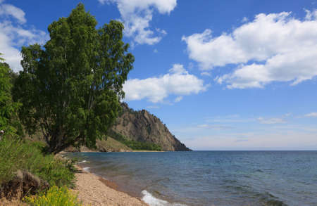 Majestic birch on the lake Baikal shore Stock Photo