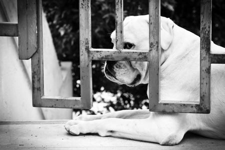 detained: Sad Dog is Sitting Behind Iron Gate