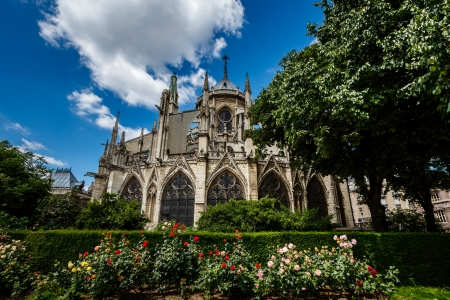Notre Dame de Paris Cathedral with Red and White Roses in Foreground, France photo
