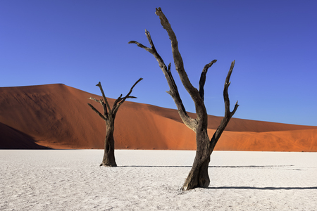 Dead Acacia Trees and Red Dunes of Deadvlei in Namib-Naukluft Park, Namibia