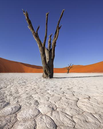 死んだアカシアの木とナミブナウクルフト公園、ナミビアの Deadvlei の赤い砂丘
