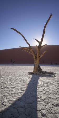Dead Acacia Trees of Deadvlei in Namib-Naukluft Park, Namibia 写真素材
