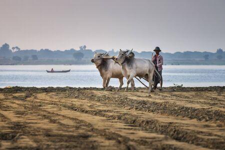 Taung Tha Man Lake, Myanmar - November 12, 2018: Burmaese Peasant Working in Field