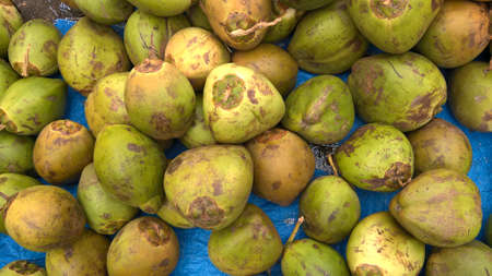 Scenic view of fresh green tender coconuts, Cocos nucifera is a member of the palm tree family