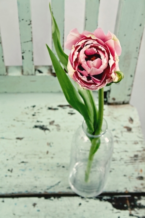Pink tulip on a vintage wooden chair photo