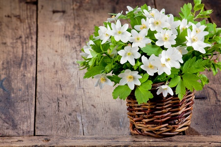 Bouquet of spring flowers - wood anemones on a rustic background