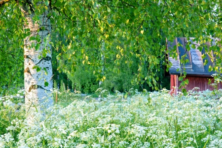 Green summer landscape with a birch tree and a red barn in Scandinavia