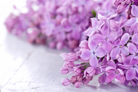 Closeup of lilacs on a white rustic background photo
