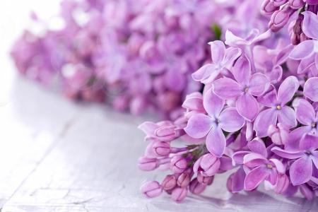 Primer plano de lilas sobre un fondo blanco rústico