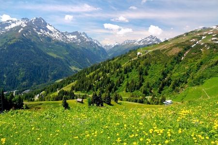 dandelion snow: Alpine mountains and yellow dandelions in Austria