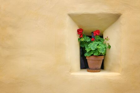 Red flowers next to a yellow wall photo