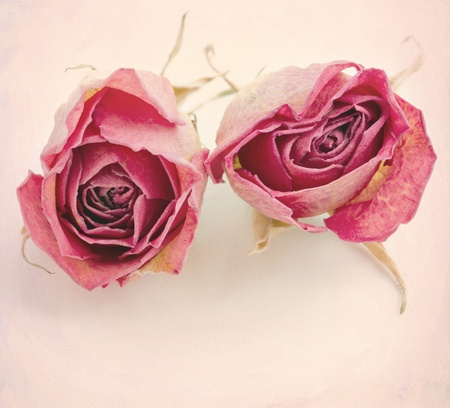 Two dried roses on textured creamy pink background with copy space