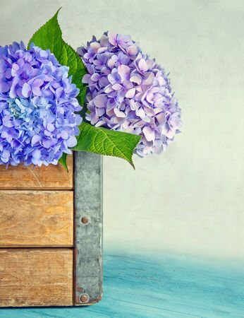 Blue hydrangea flowers in a old wooden box with rustic background