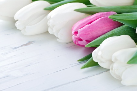 one of a kind: Pink tulip among white tulips on white wooden rustic table - One Of A Kind concept