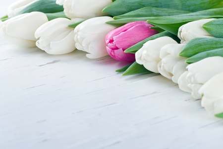 unique concept: Pink tulip among white tulips on white wooden rustic table - Unique concept