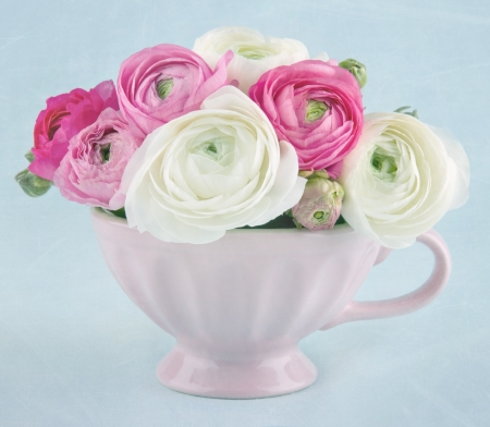 Ranunculus flowers in a pink cup on light blue textured background Stock Photo - 17974747