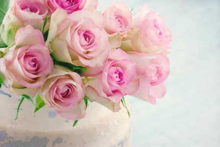 blue roses: Creamy pink roses in a shabby chic metal bucket on vintage wooden background