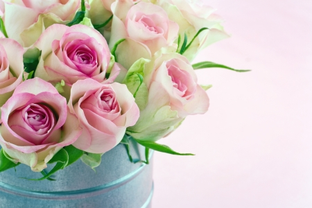 Pink romantic roses on pastel color shabby chic background photo