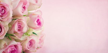 Pink roses on textured pastel background with copy space Stock Photo