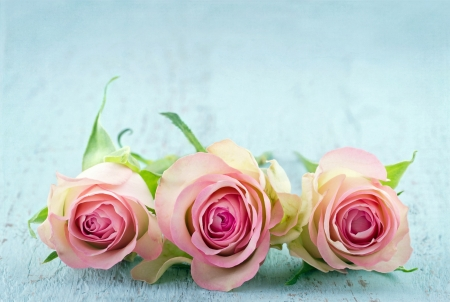 Three pink roses on light blue wooden shabby chic background with copy space
