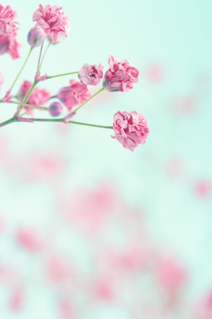 Pink baby's breath flowers on light blue pastel shabby chic textured background, soft and delicate floral pattern Stockfoto