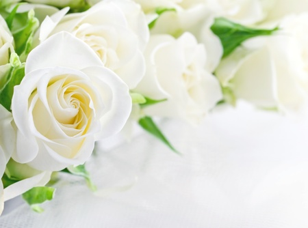 Closeup of white wedding roses on light romantic background with copy space