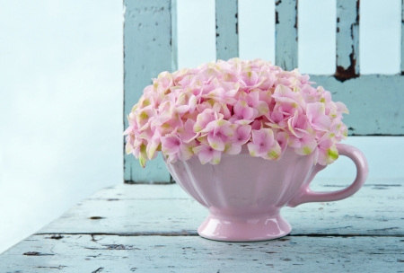 hydrangea: Cup full of pink hydrangea flowers on blue old vintage shabby chic chair Stock Photo