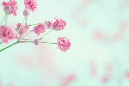 Pink babys breath flowers on light blue pastel shabby chic textured background, soft and delicate floral pattern photo