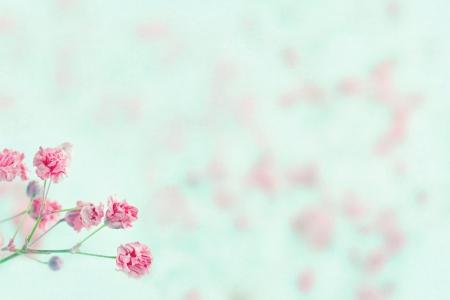Rosa Baby Atem Blumen auf hellblau pastell Shabby Chic strukturierten Hintergrund und kopieren Sie Platz, weich und zart florale Muster Standard-Bild - 19979204