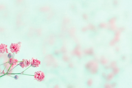 Pink baby's breath flowers on light blue pastel shabby chic textured background and copy space, soft and delicate floral pattern Stockfoto