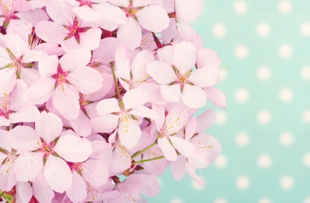 Pink cherry blossom flower bouquet on light blue vintage polkadot background