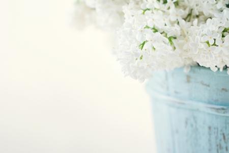 arreglo floral: Ramo de lilas blancas flores de primavera en un florero azul de madera en la luz de fondo shabby chic