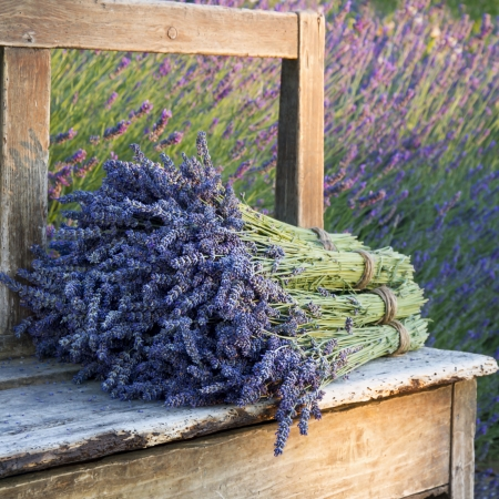 lavendin: Pile of lavender flower bouquets on a wooden old bench in a summer garden Stock Photo