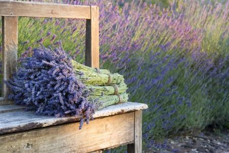 Pile of lavender flower bouquets on a wooden old bench in a summer garden Standard-Bild