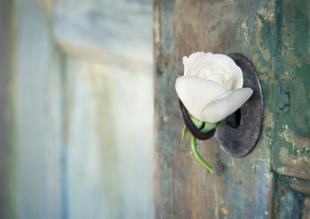 ajar: Green old wooden door opening with light shining through and white rose hanging from an old key