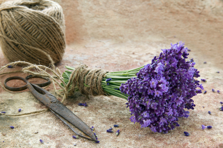 antique scissors: Bouquet of fresh purple lavender flowers tied with rustic twine on brown terracotta background
