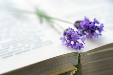 Open old brown covered book with blue lavender flower on top, selective focus
