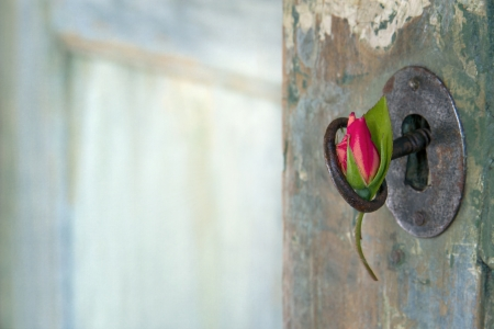 Green old wooden door opening with light shining through and red rose hanging from an old key Imagens