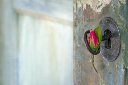 shining through: Verde vecchia apertura porta di legno con la luce splende attraverso e rosa rossa appesa una vecchia chiave