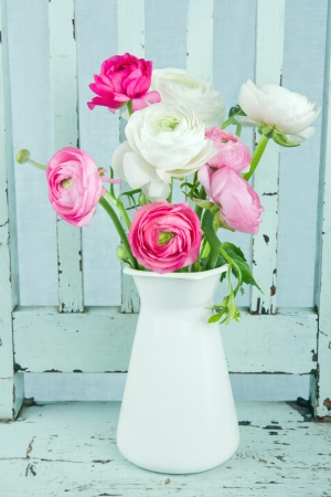 White and pink ranunculus flowers on light blue vintage chair Stockfoto