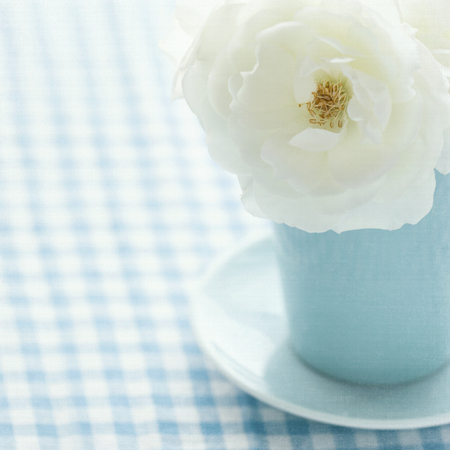 White rose in a light blue vase on shabby chic vintage background Stock Photo - 22558834