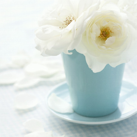 White rose in a light blue vase on shabby chic vintage background Stock Photo