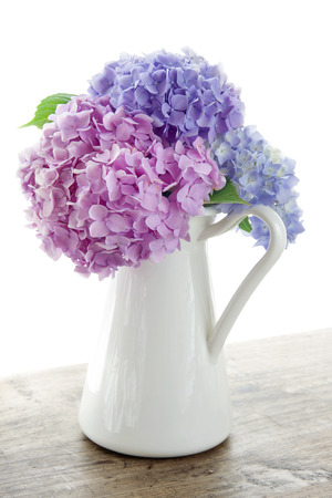 Pastel color hydrangea flowers on wooden table and white background