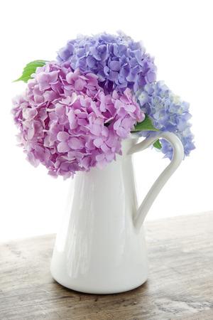 Pastellfarben Hortensien auf Holztisch und weißen Hintergrund Standard-Bild - 23097301