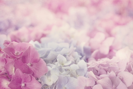 Pink hydrangea flowers with shabby chic textured background