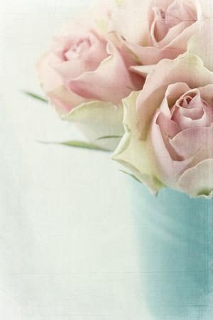 질감 밝은 파란색 배경에 빈티지 핑크 장미 스톡 콘텐츠
