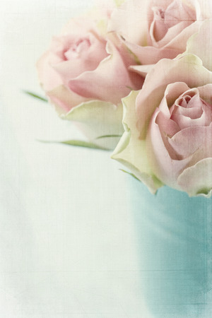 Vintage pink roses on textured light blue background