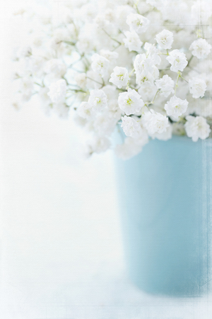 White babys breath flowers in a vase on light blue textured vintage background