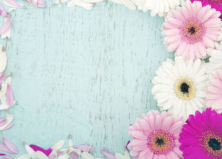 Light blue wooden vintage background with copy space framed with pink gerbera flowers Stock Photo